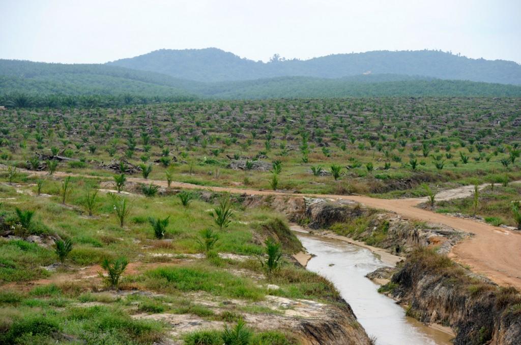 Palm slavery