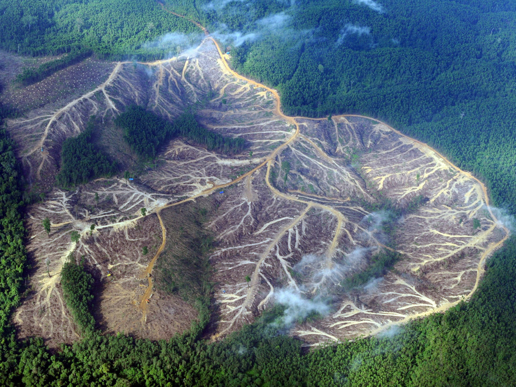 deforestation of the amazonian rainforest