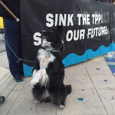 2016-2-4 FLUSH THE TPP dog Allie begs LH
