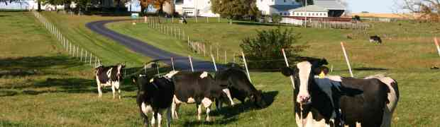 Opposition to Trans-Pacific Partnership evident in dairy producer survey